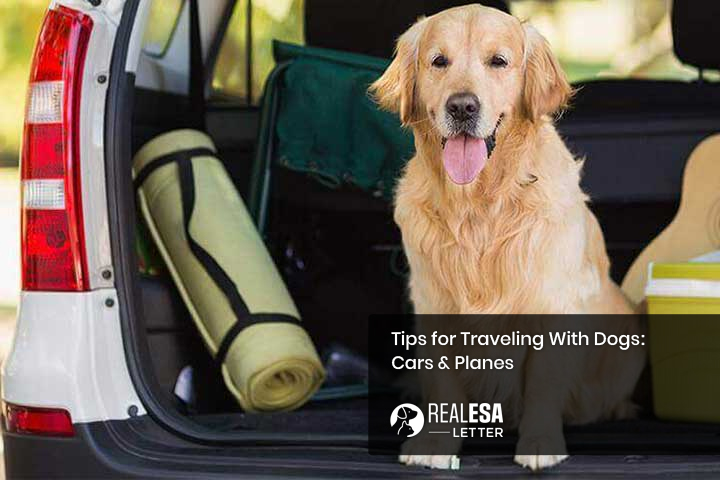 Tips for Traveling With Dogs: Cars & Planes