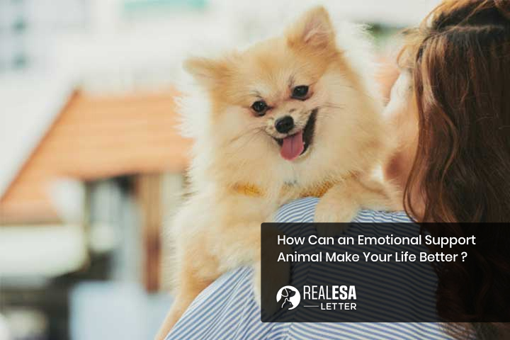How Can an Emotional Support Animal Make Your Life Better?