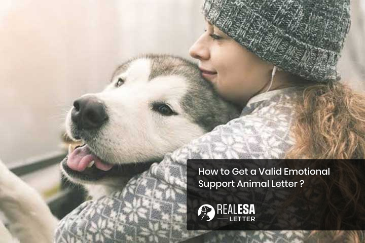 How to Get a Valid Emotional Support Animal Letter