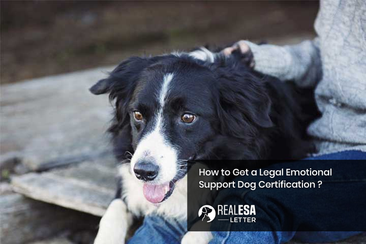 How to Get a Legal Emotional Support Dog Certification