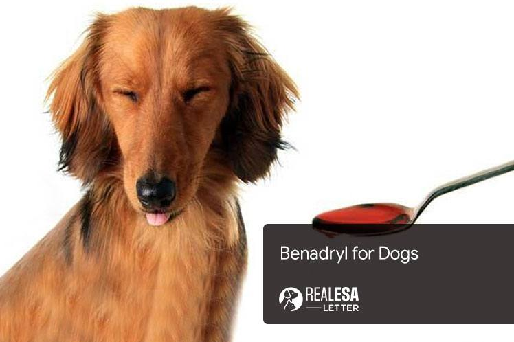 Benadryl for Dogs: Benefits, Dosage and Side Effects
