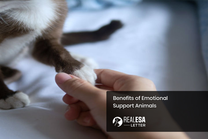 ESAs: Benefits of Emotional Support Animals