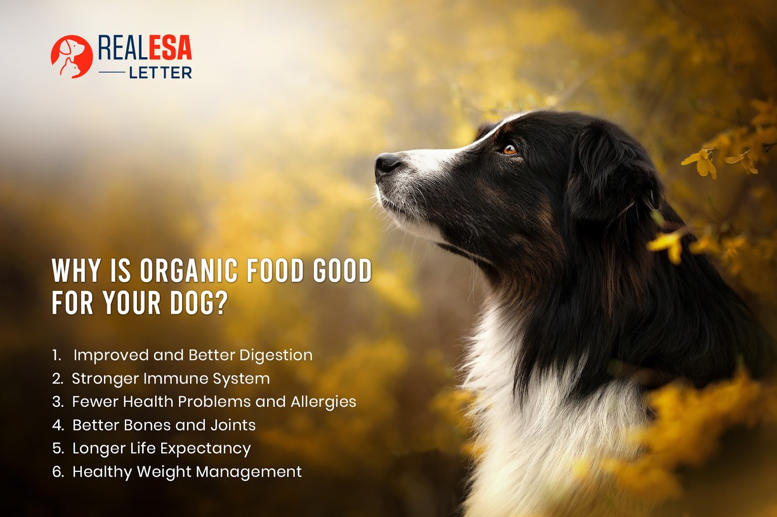 benefits of organic dog food