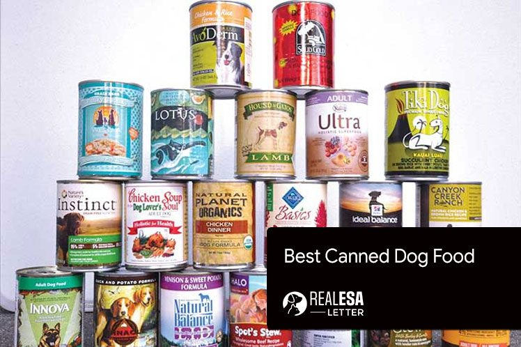 10 Best Canned Dog Food Choices in 2021