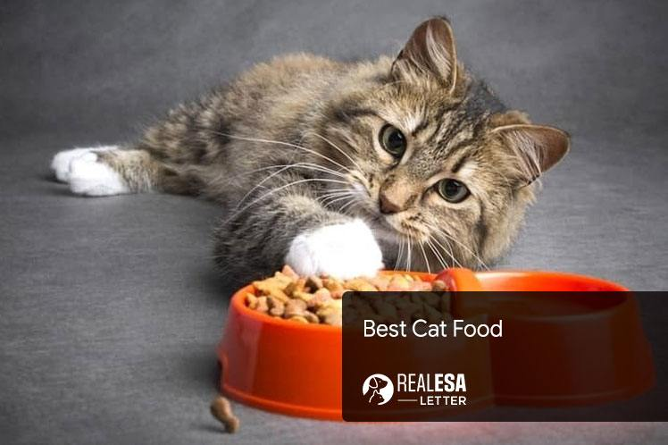 Best Cat Food for Your Kitty; Recommended by Vets