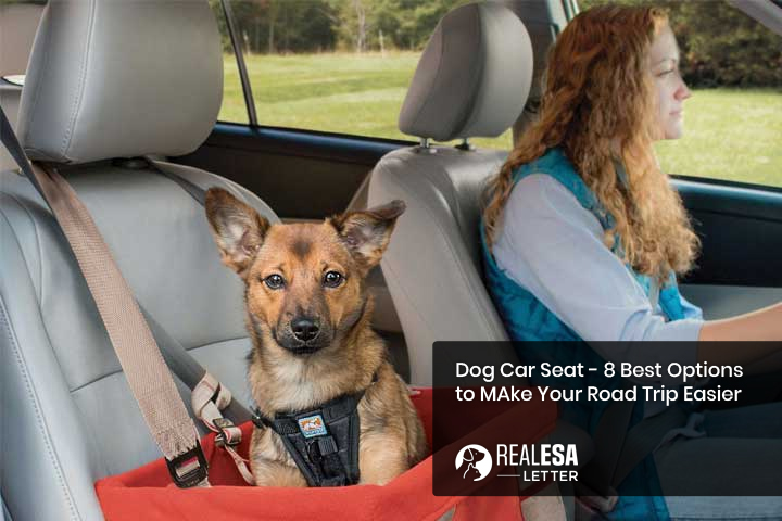Dog Car Seat - 8 Best Options to Make Your Road Trip Easier