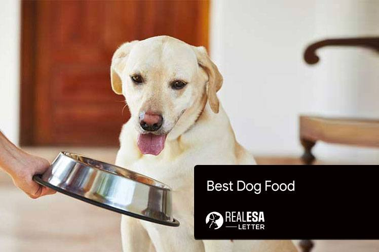 2021 Best Dog Food for your Beloved Canine