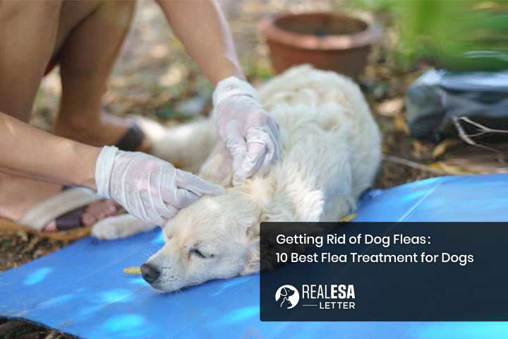 Getting Rid of Dog Fleas: What is the Best Flea Treatment for Dogs