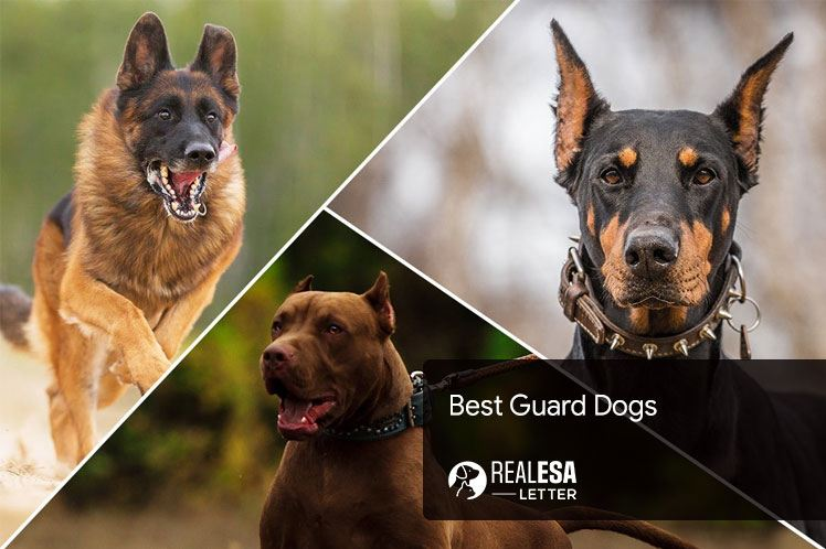 Best Guard Dogs to Protect Your House and Family
