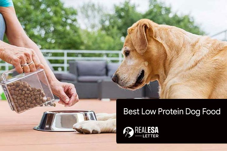 A Guide For Buying The Best Low Protein Dog Food - 2021