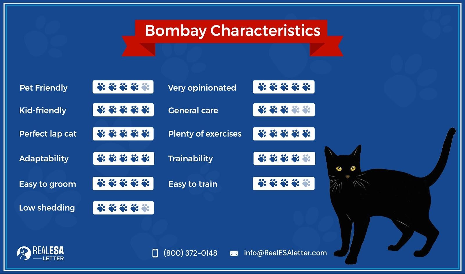 Bombay Characteristics
