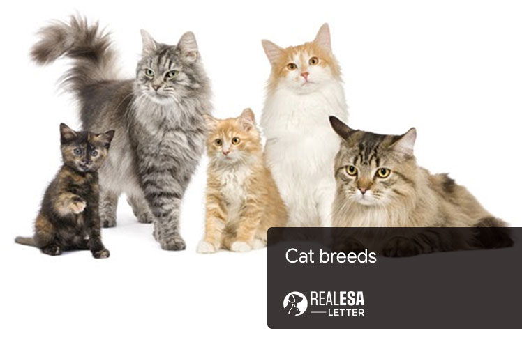 Cat Breeds - Different Types and Interesting Facts