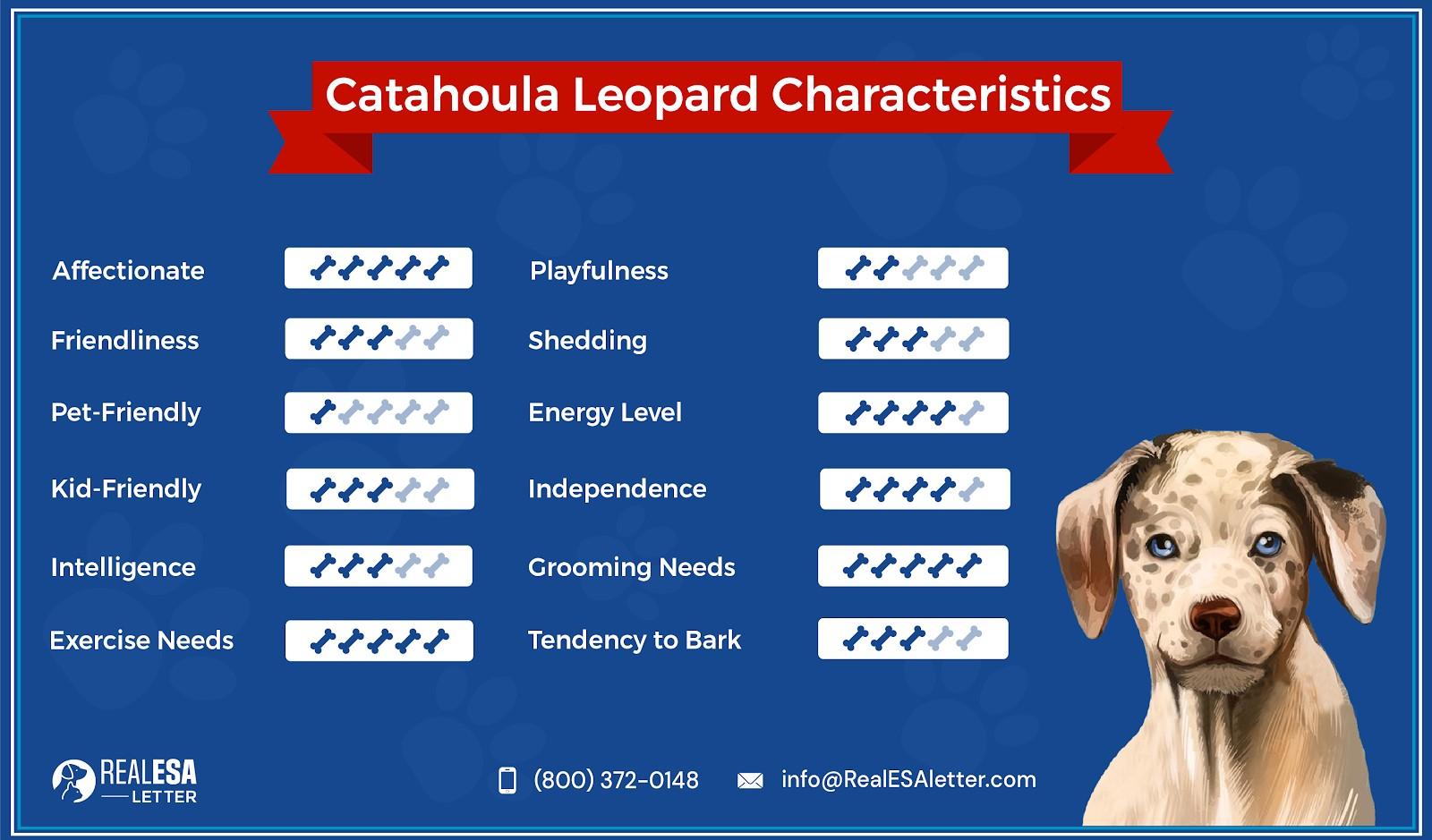 Catahoula Leopard characteristics