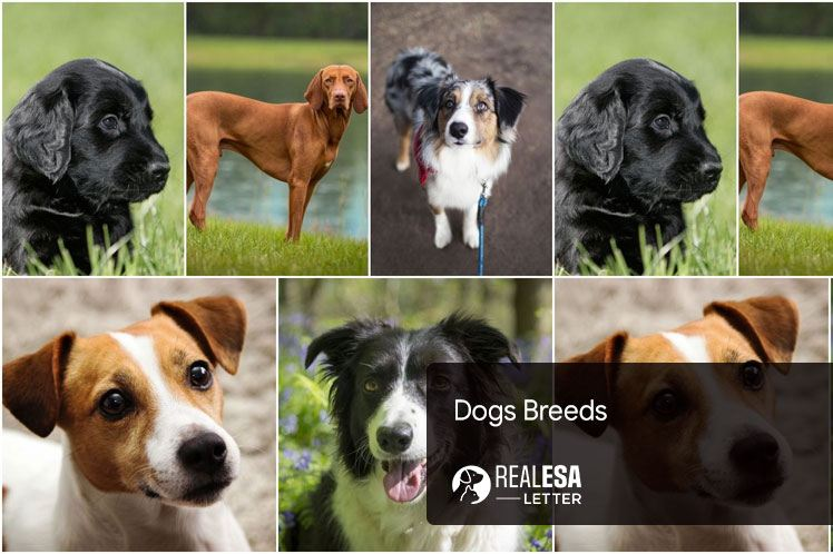 Dog Breeds - Origins, Groups, and Types of Breeds