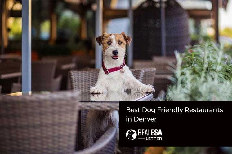 Best Dog Friendly Restaurants in Denver - 2020