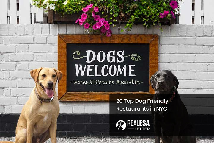 20 Top Dog Friendly Restaurants in NYC