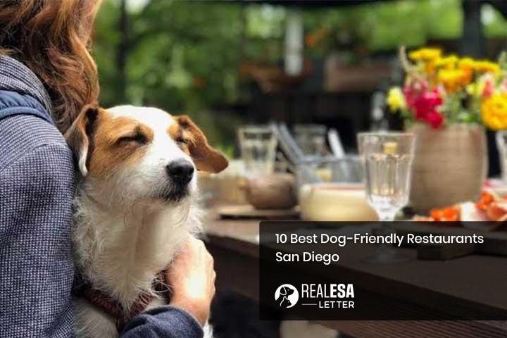 10 Best Dog-Friendly Restaurants - San Diego