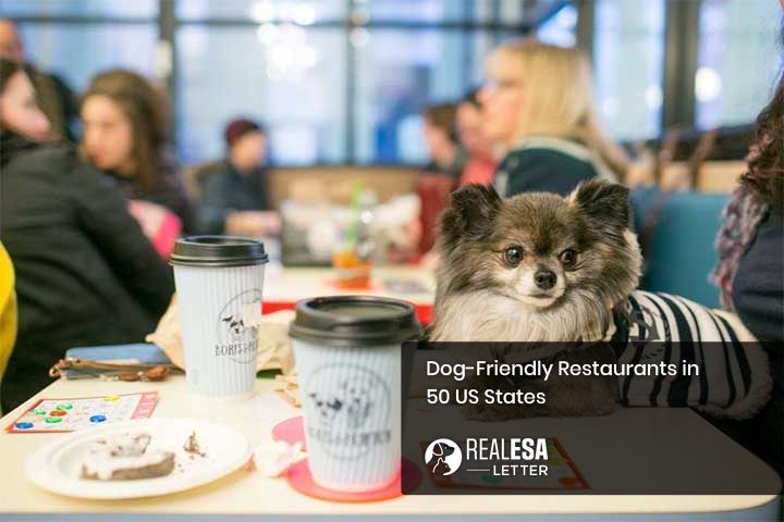Dog-Friendly Restaurants in 50 US States