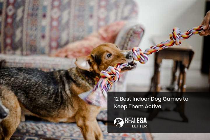 12 Best Indoor Dog Games to Keep Them Active