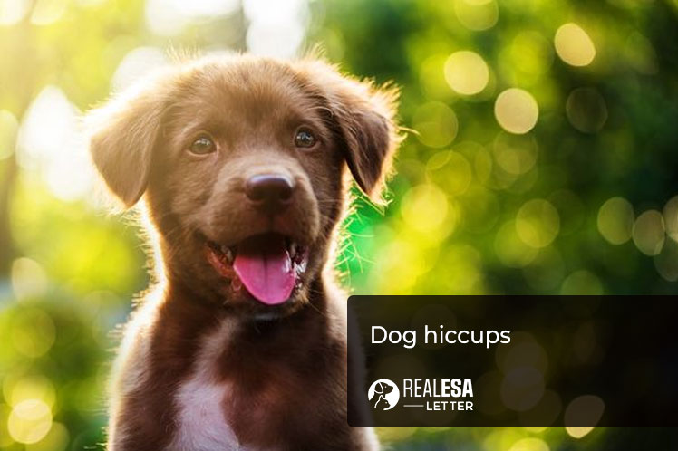 dog hiccups