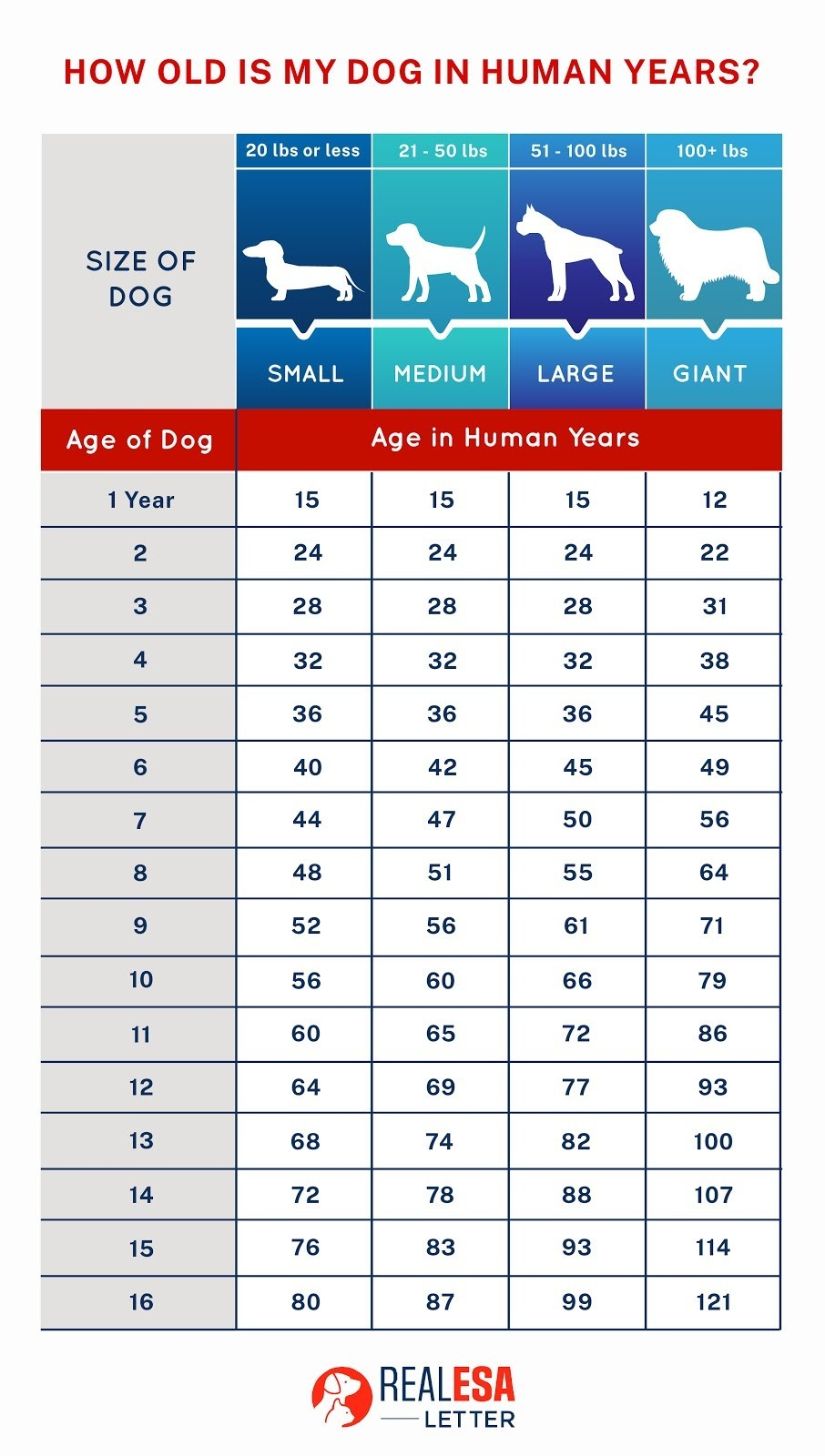 How long do dogs live in human years