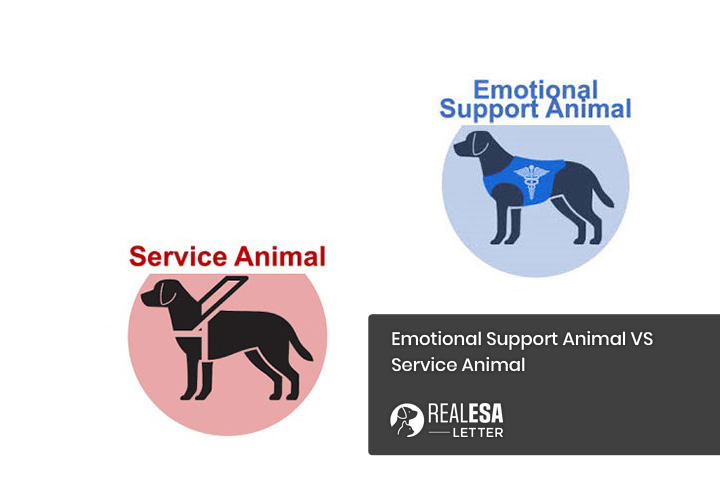 Emotional Support Animal VS Service Animal