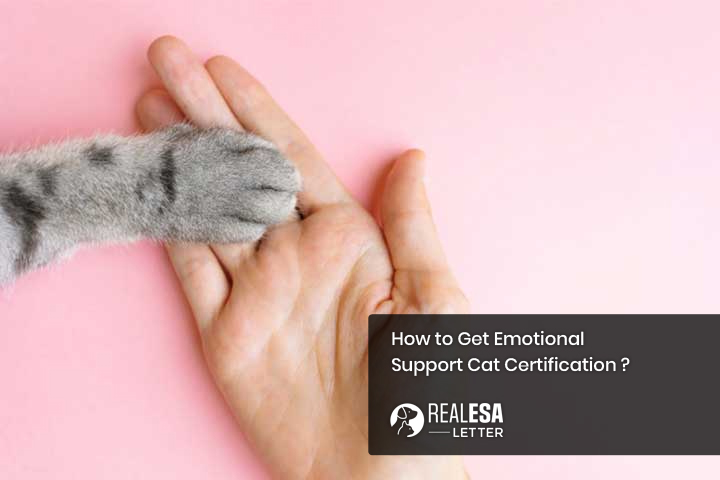How to Get Emotional Support Cat Certification