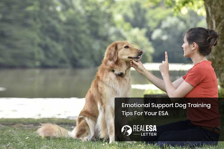 Emotional Support Dog Training - Tips For Your ESA