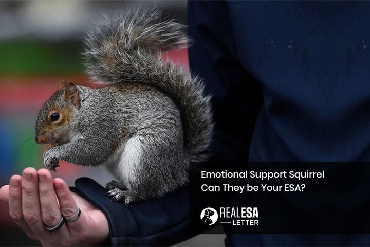 Emotional Support Squirrel – Can They be Your ESA?