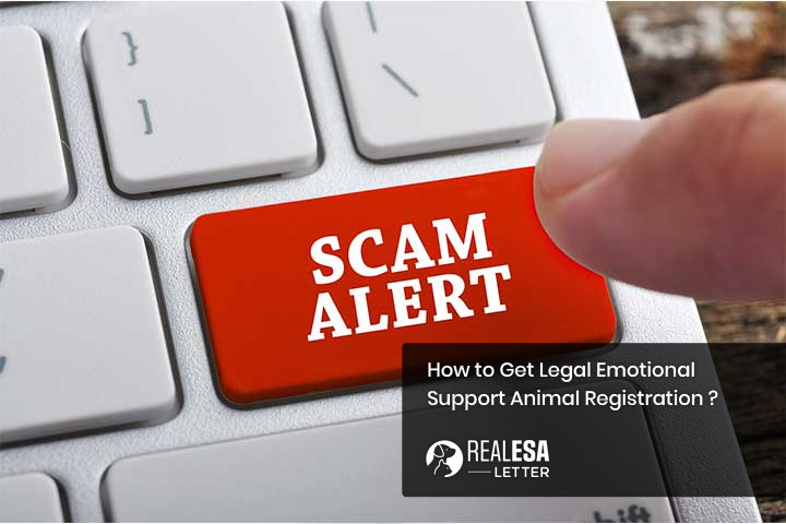 How to Get Legal Emotional Support Animal Registration