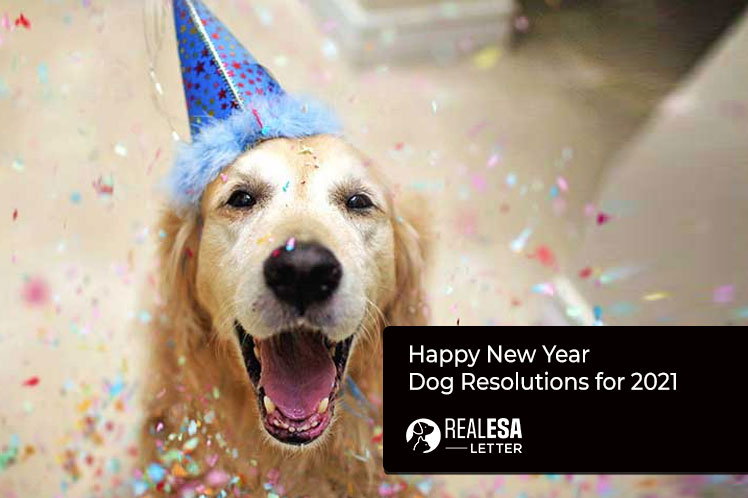 Happy New Year - Dog Resolutions for 2021