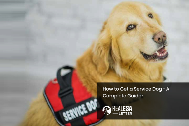 How to Get a Service Dog - A Complete Guide