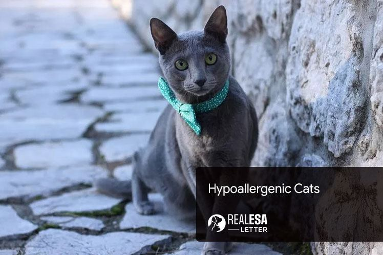 10 Hypoallergenic Cats for People with Allergies