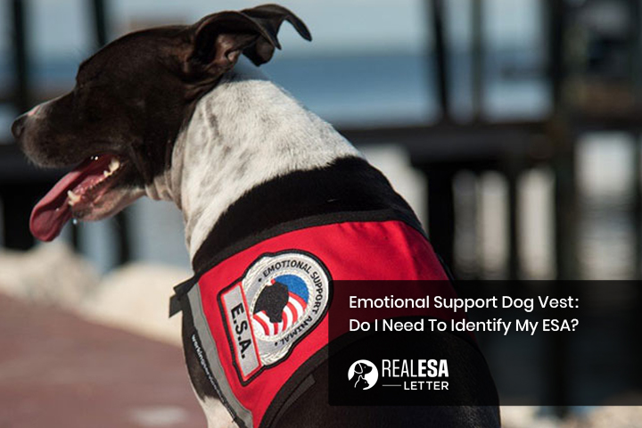 Does my emotional support dog need a vest?