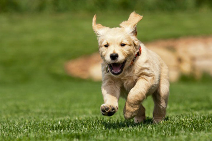 Do you need tips to keep your dog within the boundaries? Train your ESA!