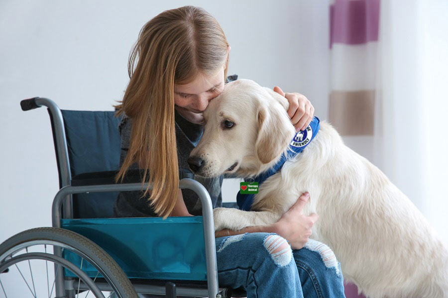 Emotional Support for Animals