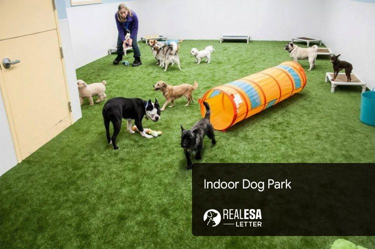 best indoor dog park