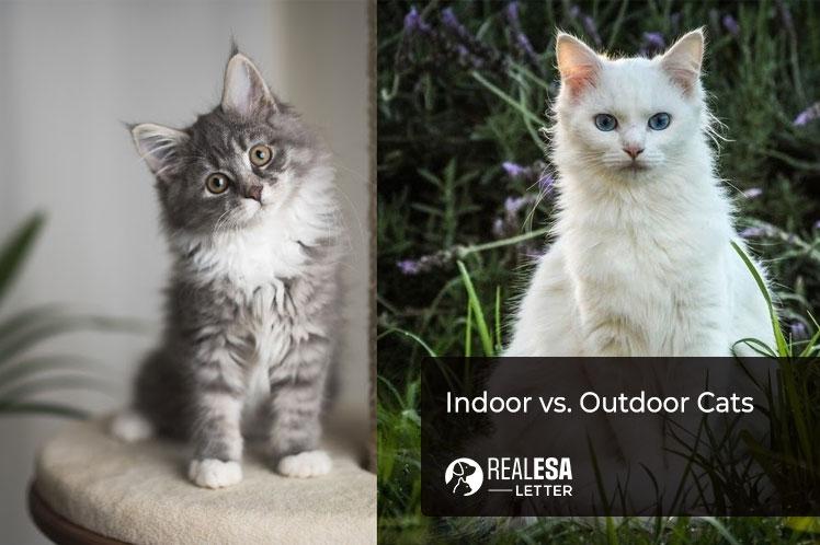 Indoor vs. Outdoor Cats