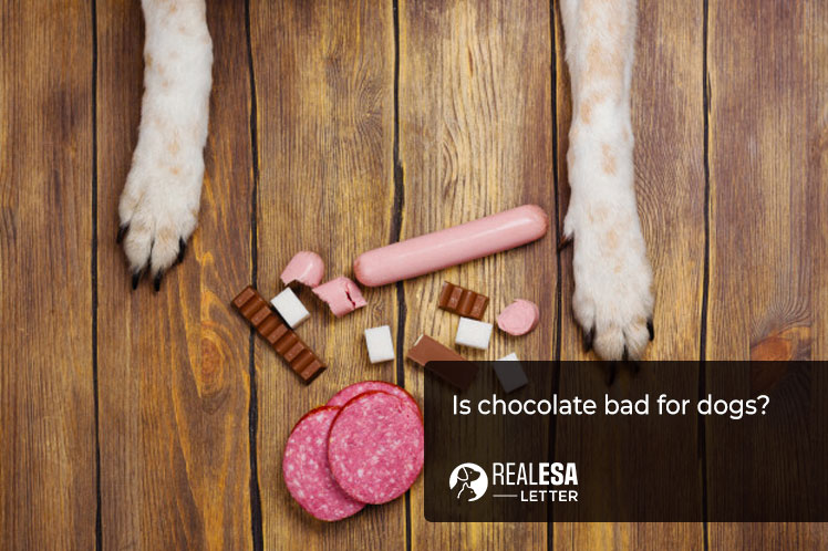 is chocolate bad for dogs?