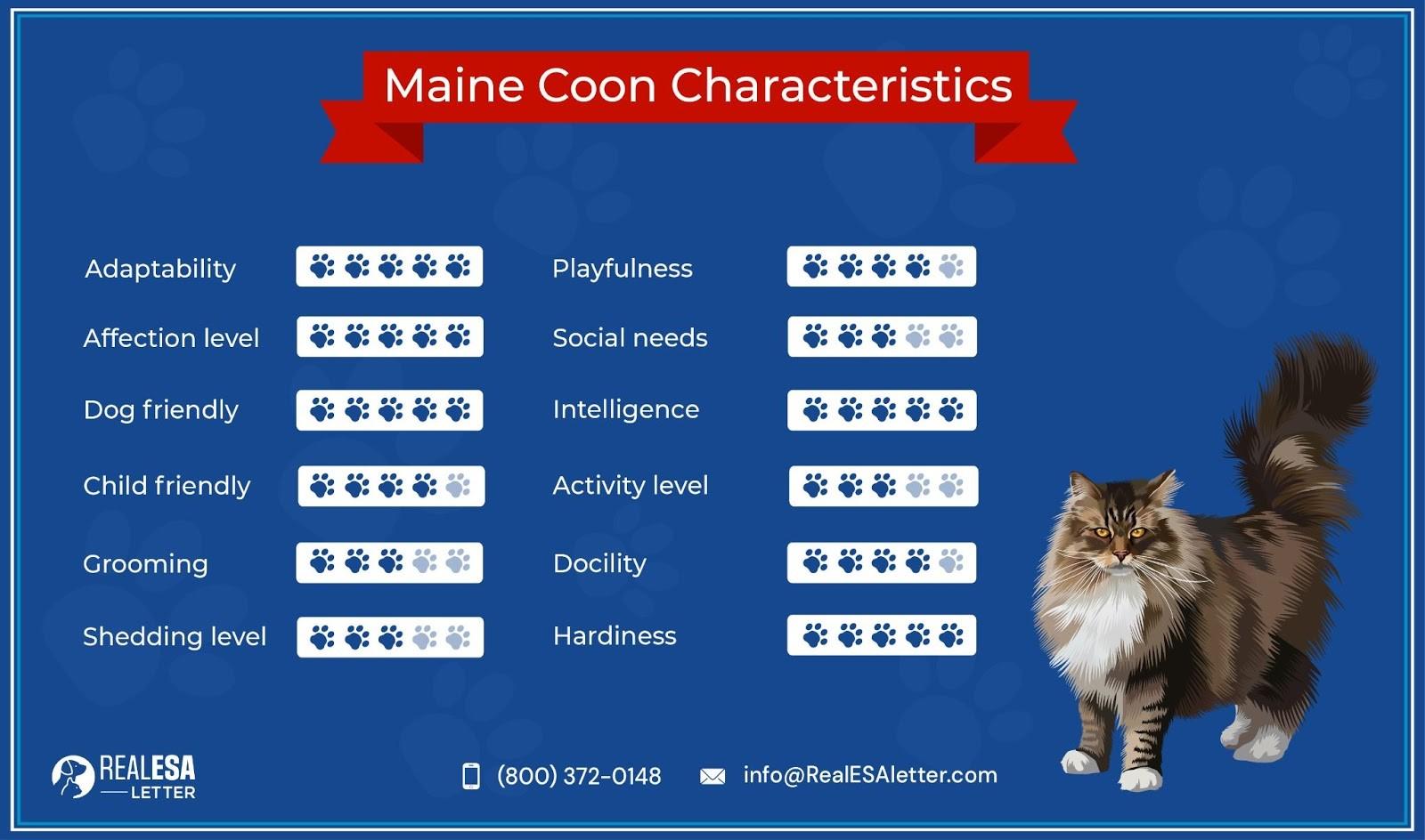 Maine Coon Characteristics