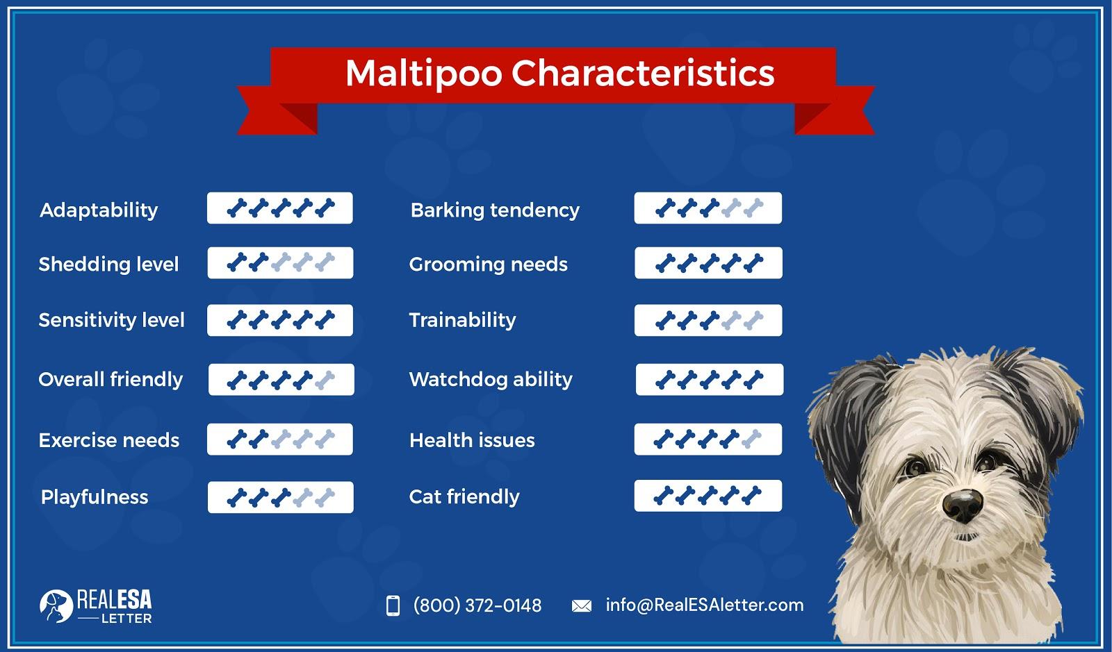 maltipoo characteristics