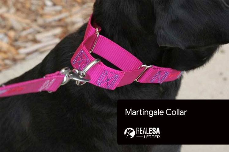 Martingale Collar - 5 Best Choices for your Dog in 2021