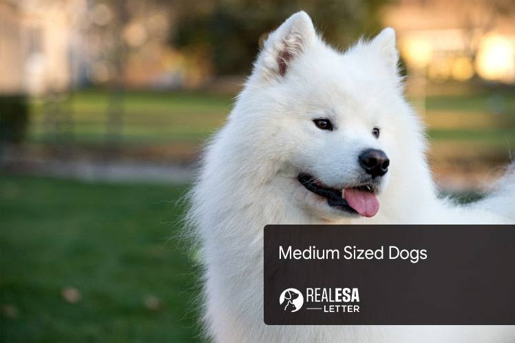 Medium Sized Dogs: Ideal Dogs for Families, and Apartments