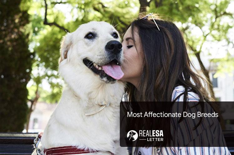 Most Affectionate Dog Breeds that Love to Cuddle