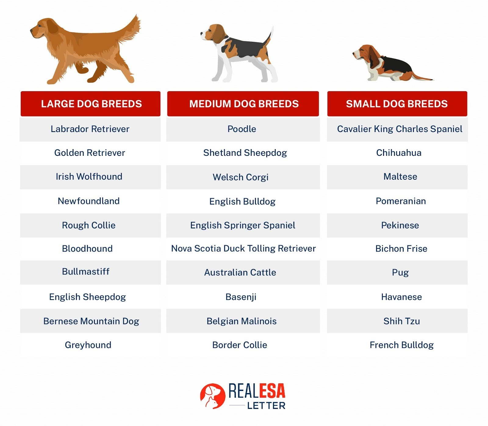 most affectionate large, medium, and small dog breeds
