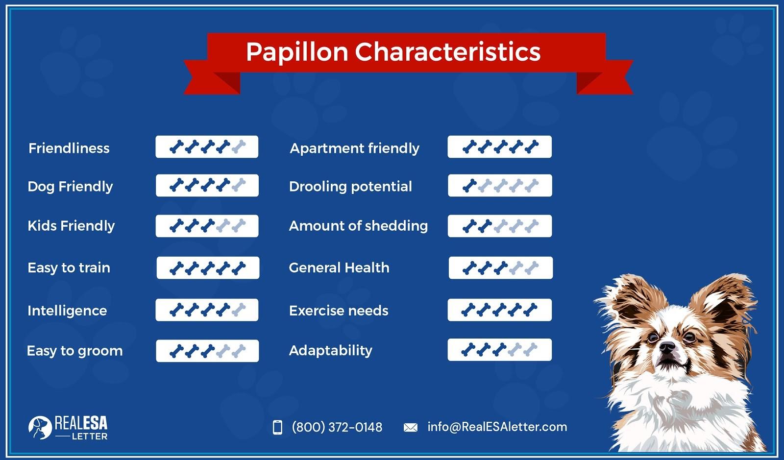 papillon dog characteristics