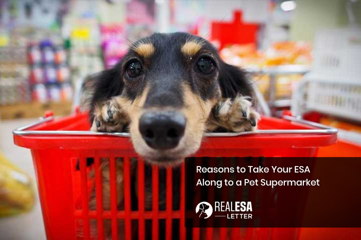 Reasons to Take Your ESA Along to a Pet Supermarket