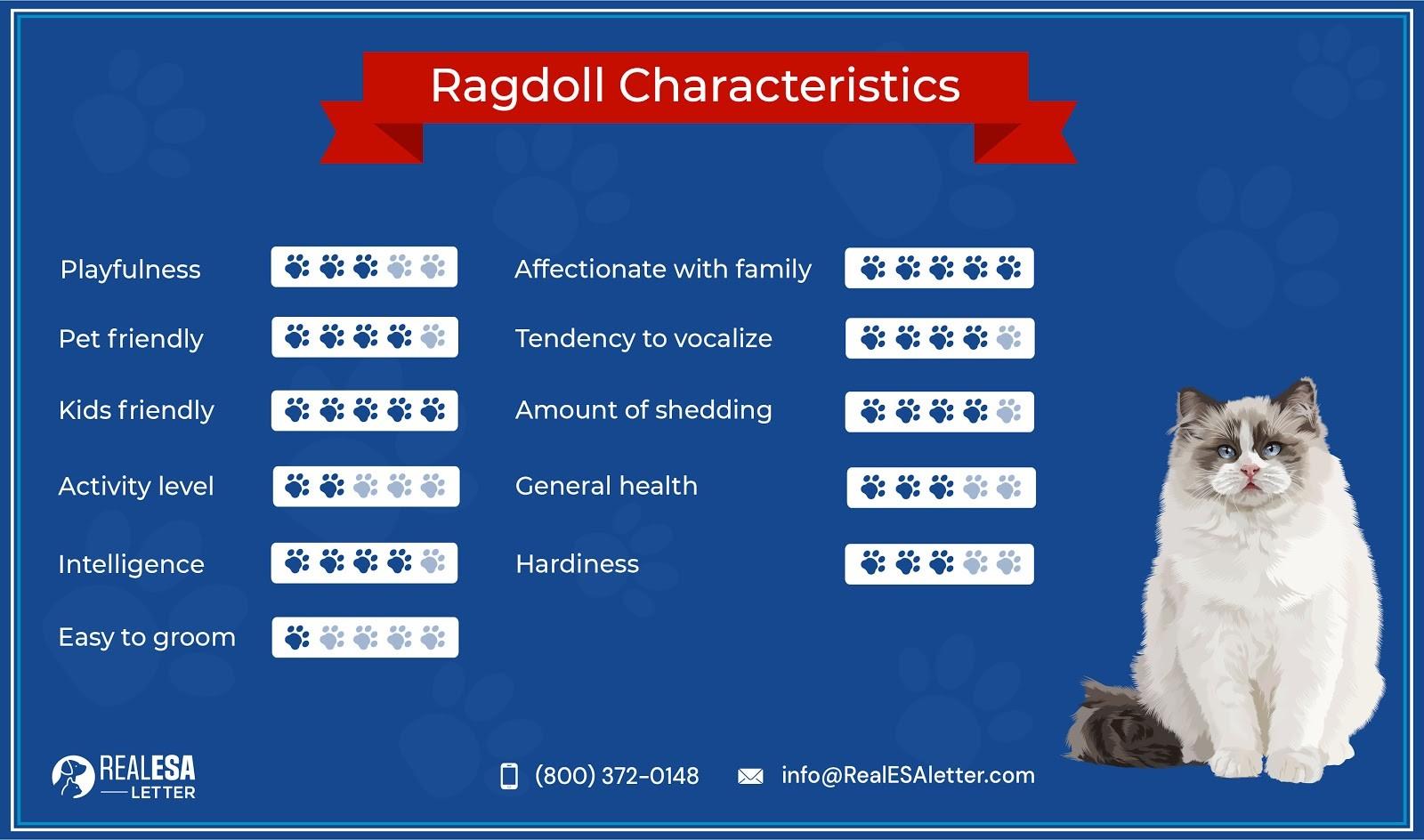 Ragdoll Cat Characteristics