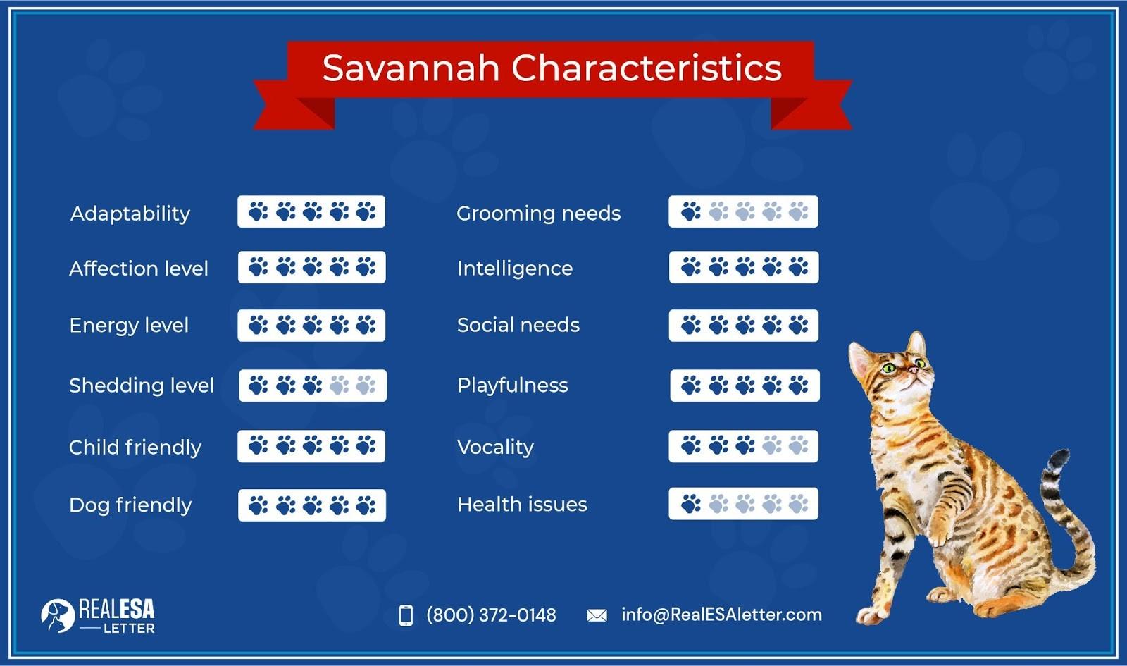 Savannah Cat Characteristics
