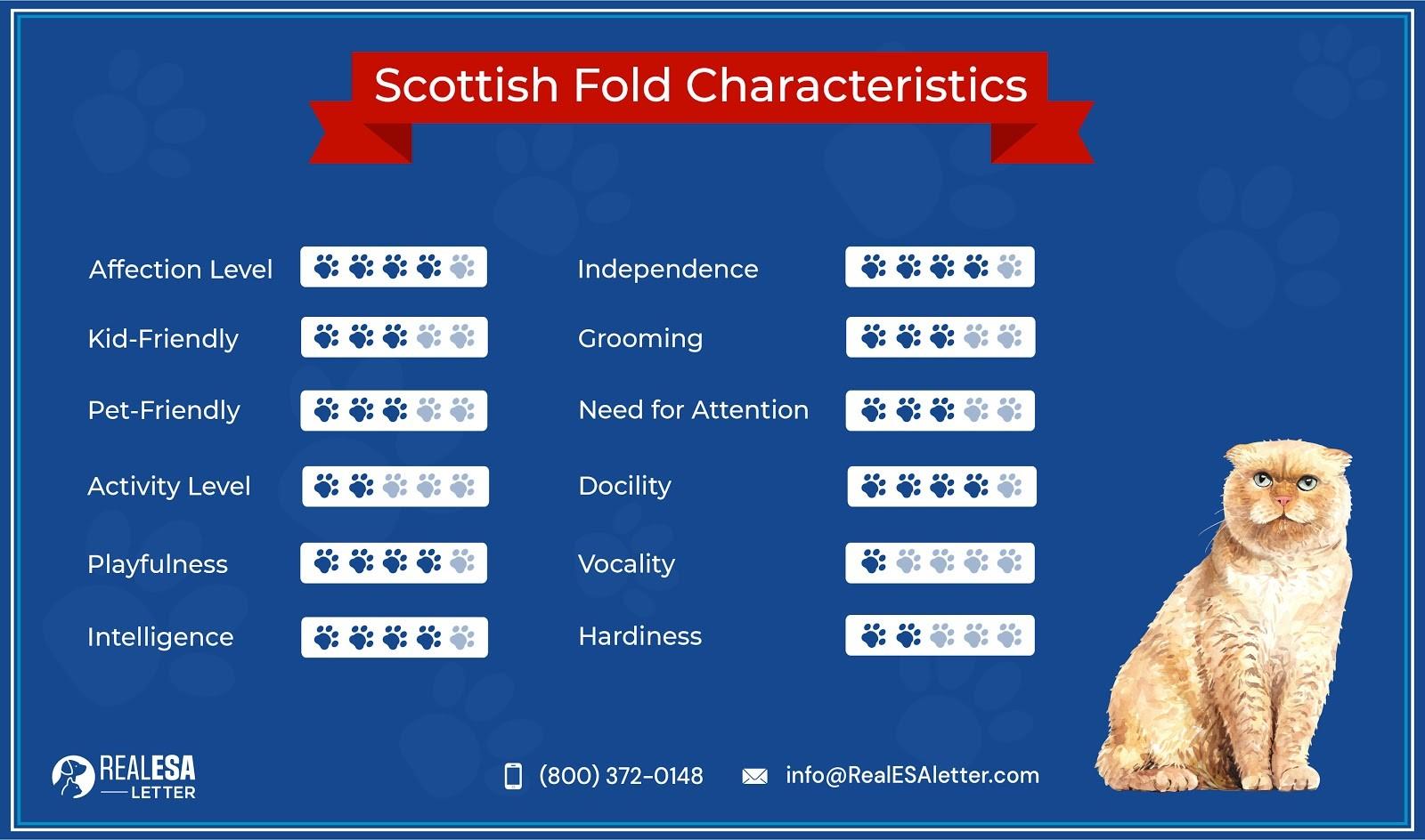 Scottish Fold Characteristics